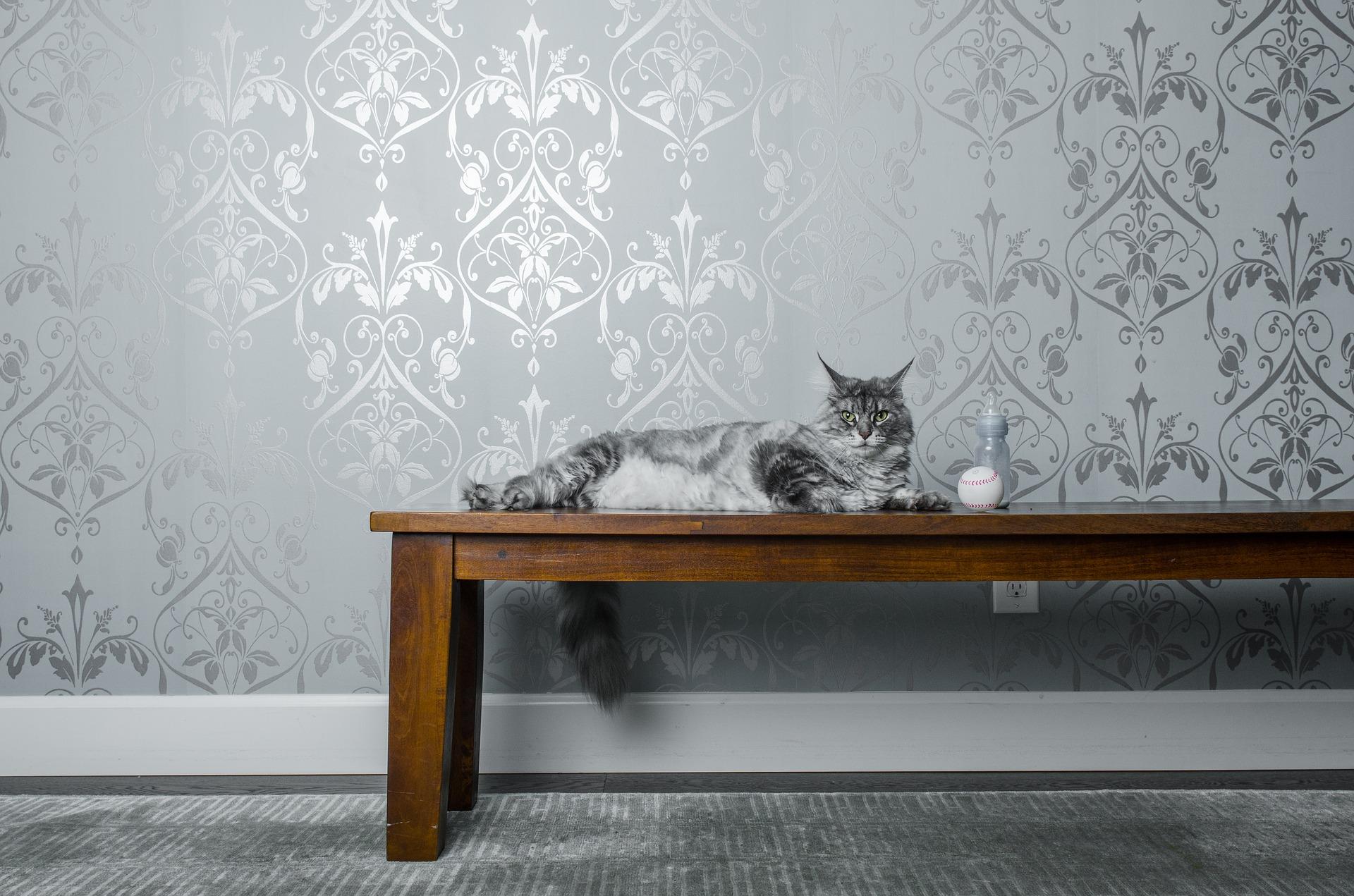 Katze Tapete Tapezieren Tapezierer Wände tapezieren Tapeten Kleben Kosten